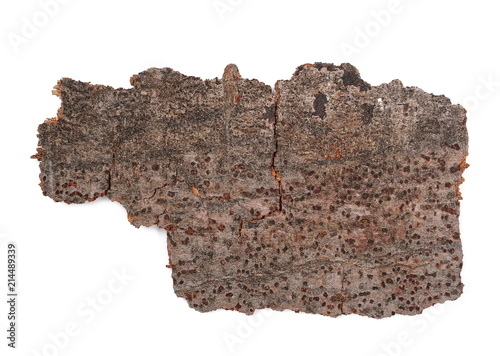 Tree beech bark with lichen isolated on white background and texture, top view