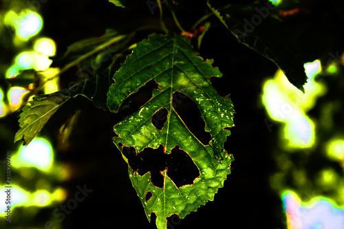 foglia di albero a forma di teschio Billede på lærred