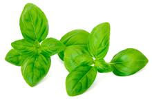 Fresh Green Basil Leaves Isola...