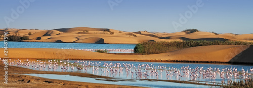Photo sur Toile Flamingo Flock of flamingos in a lagoon on Pelican Point, Walvis Bay, Namibia