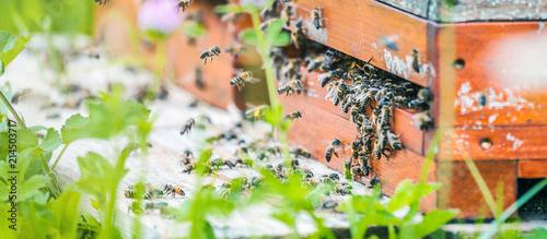 Bienenhaus im  Blumenfeld Canvas Print