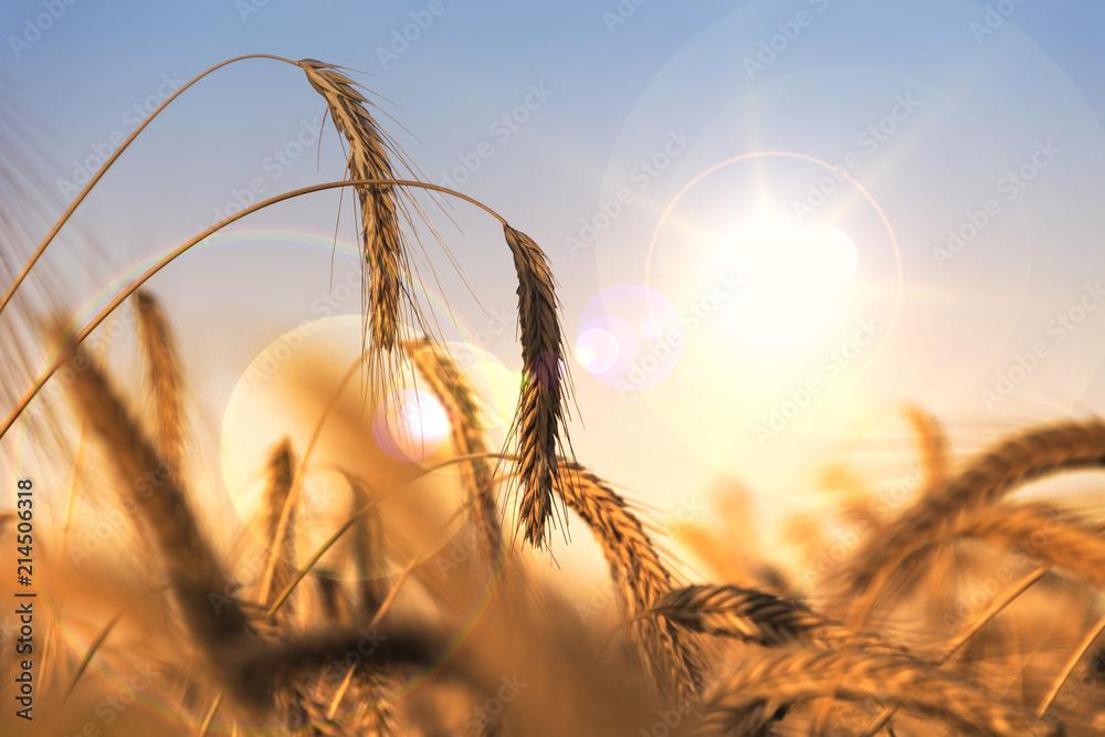 Fototapeta Getreide & Trockenheit