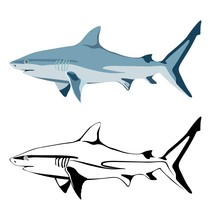 Set Of Images Of Shark And Its...