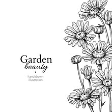 Daisy Flower Border Drawing. Vector Hand Drawn Engraved Floral Frame. Chamomile