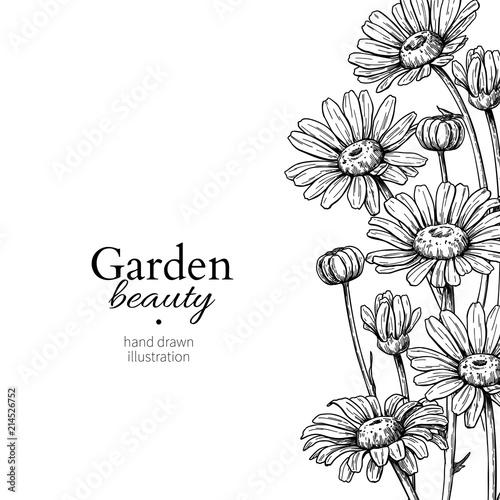 Vászonkép Daisy flower border drawing