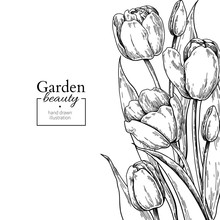 Tulip Flower And Leaves Drawing Border. Vector Hand Drawn Engraved Floral Frame.
