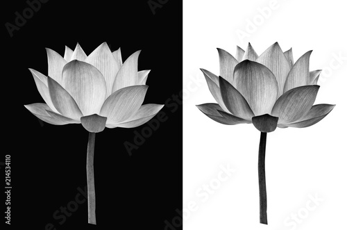 Deurstickers Lotusbloem Lotus flower on black and white background