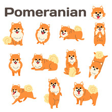 Pomeranian,dog In Action