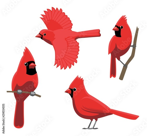 Fotomural Bird Poses Northern Cardinal Vector Illustration