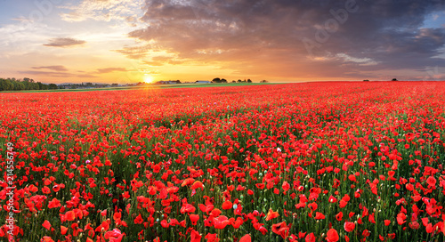 Poster Klaprozen Poppy flowers meadow and nice sunset scene