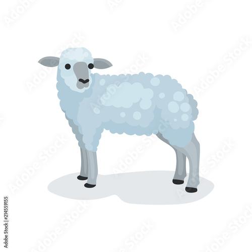 Flat Vector Icon Of Cute Gray Lamb Small Domestic Sheep Biblical