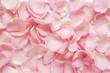 canvas print picture - pink rose petals