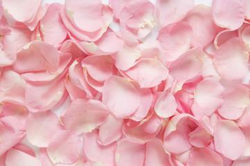 pink rose petals