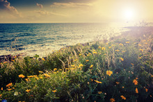 Flowering Yellow Flowers On The Seashore, Beautiful Sunset, Summer And Spring Vacation Background