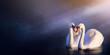 canvas print picture - Art beautiful romance landscape; love couple white swan