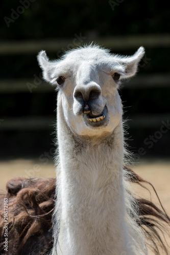 Photo Dumb animal
