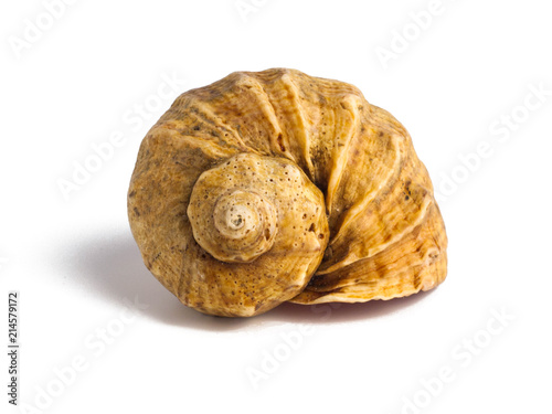 Beautiful sea shell isolated on white background