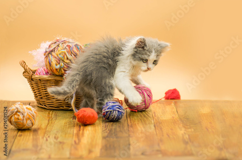 Printed kitchen splashbacks Cat Little funny kitten with a ball of knitting. Cat with a ball