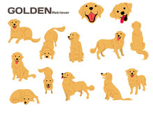 Golden Retriever,dog In Action,happy Dog