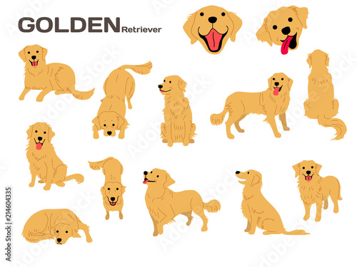 golden retriever,dog in action,happy dog Fotobehang