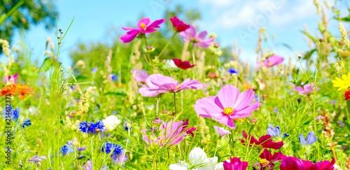 Cadres-photo bureau Vert chaux Blumenwiese - Sommerblumen - Wildblumen