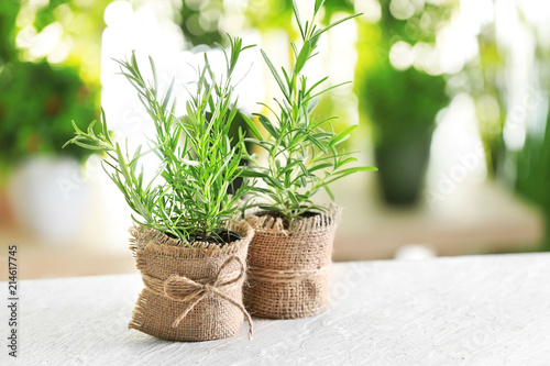 Pots with fresh rosemary on table against blurred background Fototapet
