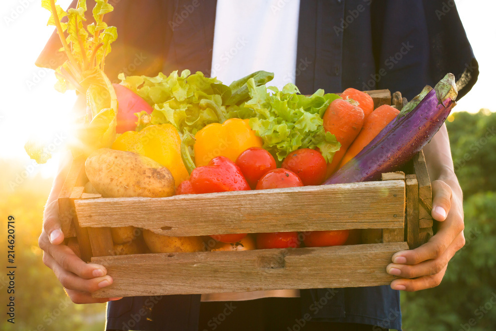 Fototapety, obrazy: Fresh vegetable harvest and carrying by farmer at beautiful sunset.