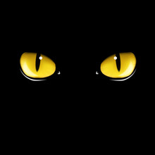Black Cat's Eyes Vector Illustration