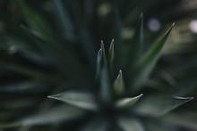 Close Up Macro View Of Green S...
