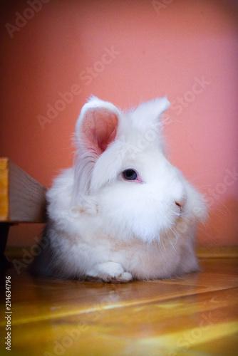Fotodibond 3D Zamknij się Cute Little White Bunny śpi i odpoczywa