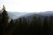 canvas print picture - Black Forest