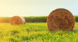 canvas print picture - Round hay bale in sunlit grassy pasture at sunset.