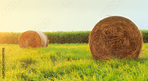 Valokuva Round hay bale in sunlit grassy pasture at sunset.