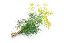 Fresh Dill With Yellow Flowers...