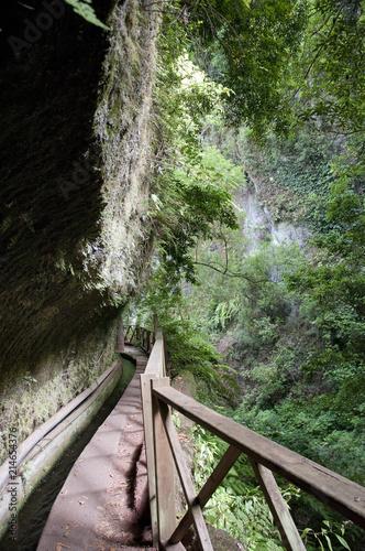 In de dag Kanaal Wanderwege im Lorbeerwald