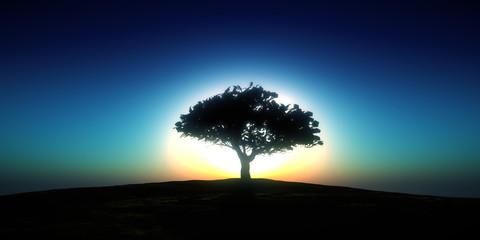 tree sunset in field