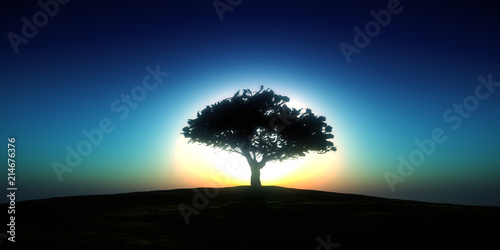 Poster Campagne tree sunset in field