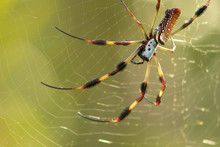 Large Arachnid