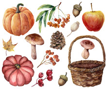 Watercolor Autumn Harvest Bright Set. Hand Painted Pumpkins, Leaves, Mushrooms, Rowan, Apple, Cone, Acorn, Woven Basket Isolated On White Background. Floral Illustration For Design Or Background.