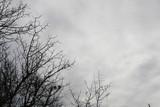Drzewo w zimie - 214688328