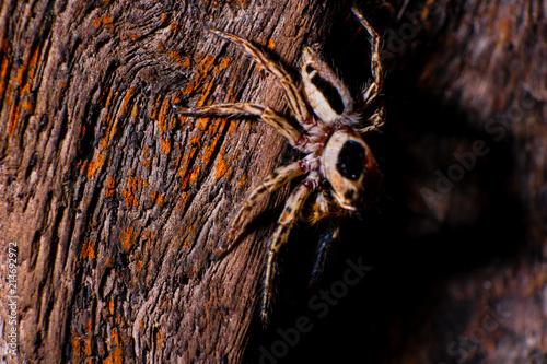 Plakat Pająk. Makro- fotografia ogrodowy pająk na pająk sieci nad naturalnym tłem