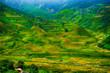 Rice fields on terraced of Mu Cang Chai, YenBai, Vietnam. Rice fields prepare the harvest at Northwest Vietnam. Vietnam landscapes.