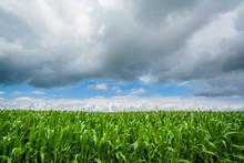A Farm Field In Rural Indiana