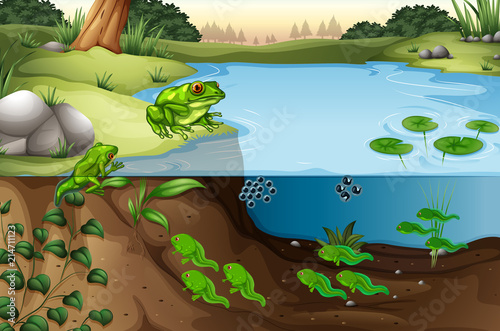 Láminas  Scene of frogs in a pond