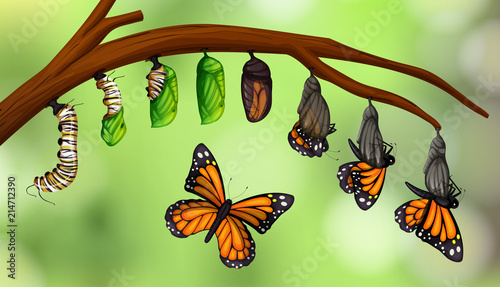 Leinwand Poster Science butterfly life cycle