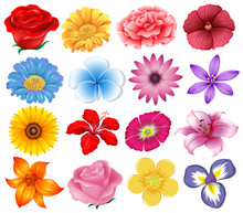 A Set Of Beautiful Flowers