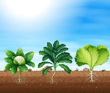 A Set Of Organic Plants