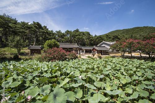 Fotobehang Olijf Beautiful Lotus in korea