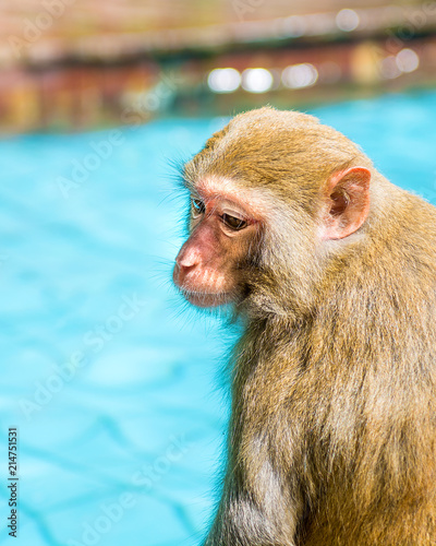 In de dag many monkeys swim in the pool, eat play and bask in the sun, the tropics.