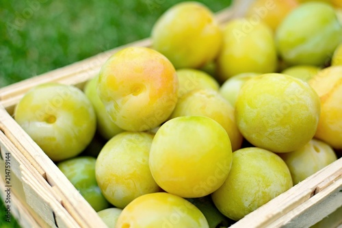 Basket full of the picked greengage or green plums on the ground in lawn.